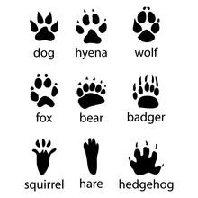 Various Traces Of Wild Animals Design Icon