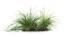 Green Grass With Dirt Isolated On White Background And Texture