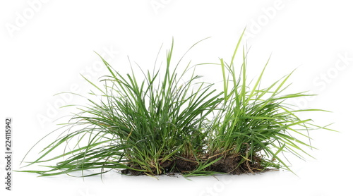 Fotografía  Green grass with dirt isolated on white background and texture