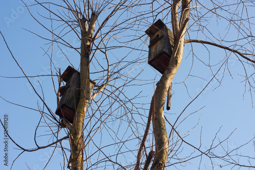 Foto op Plexiglas Lente Birdhouses against the blue spring sky fortified on the branches of trees.