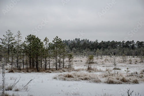 In de dag Donkergrijs snowy winter countryside scene with snow and frozen trees