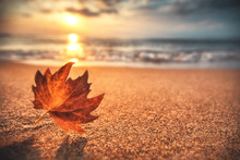 Autumn Leaf On The Sand. Beaut...