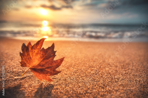 Photo Stands Autumn Autumn leaf on the sand. Beautiful cloudscape over the sea, sunrise shot