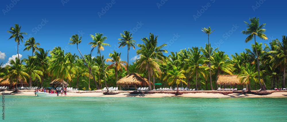 Fototapeta Panoramic view of Exotic Palm trees on the tropical beach.