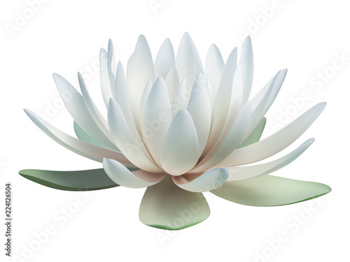 Carta da parati  Lotus flower isolated on white. Vector illustration