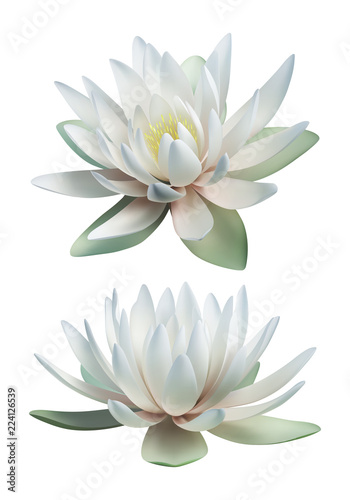 Fotografía White lotus vector isolated on white background