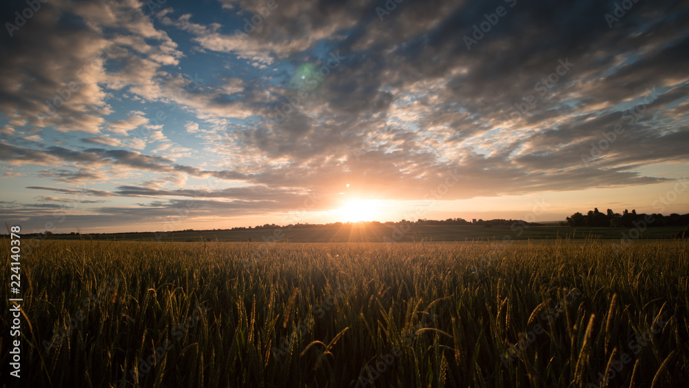 Fototapety, obrazy: Sunrise In the Rye Field