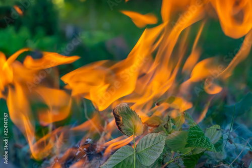 Foto op Aluminium Brandhout textuur A beautiful horizontal texture of a burning fire on a blurred blue and green plants background with sparks