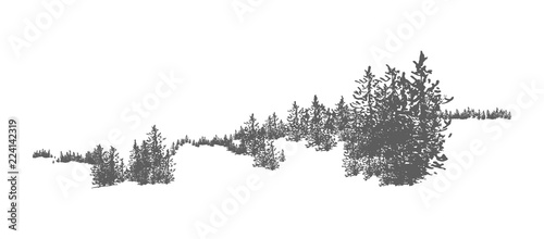 Fotografija  Wild coniferous forest landscape with hand drawn spruce, pine or fir trees growing on hills