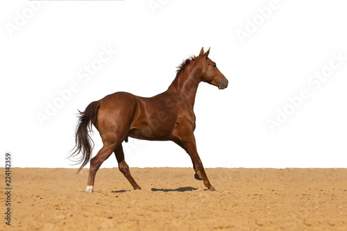 Poster de jardin Desert de sable Horse jumps on sand on a white background