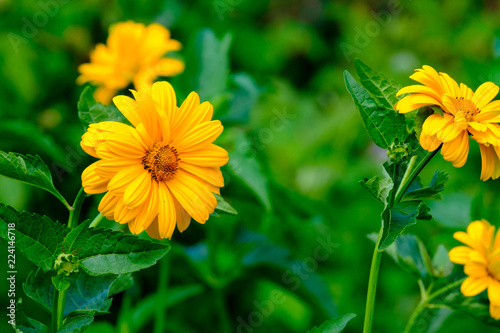 Fotobehang Bloemen gerbera flowers in the wild growing in the garden, summer flower garden blurred background for decoration
