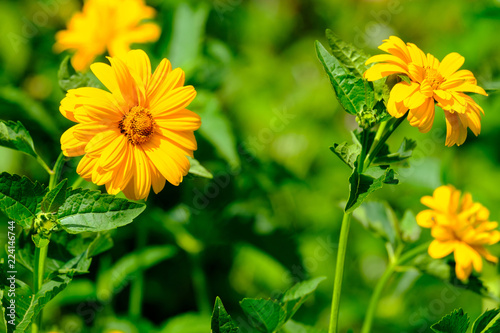 Fotobehang Bloemen four flowers of orange gerbera on the background of blurred greenery, real flowers