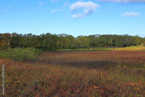 Poster Diepbruine field in autumn