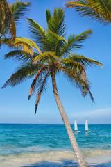 Panel Szklany Podświetlane Do łazienki Beach on the Caribbean Sea. Beautiful palm tree, sea, blue sky.