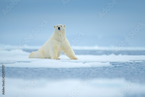 In de dag Ijsbeer Polar bear on drift ice edge with snow and water in sea. White animal in the nature habitat, north Europe, Svalbard, Norway. Wildlife scene from nature. Dangerous bear walking on the ice.