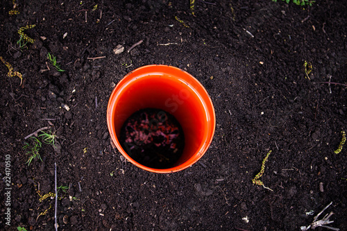 Canvas Prints Hot chili peppers DIY garnening, plant pot in the soil, top-down-view, orange pot