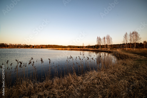 Foto op Aluminium Chocoladebruin lake shore with grass and trees in spring