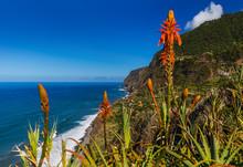 Flowers On Coast In Boaventura...
