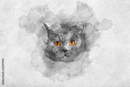 Śliczny Brytyjski shorthair kota akwareli portret.
