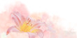 Leinwandbild Motiv Lily Flower Pink in the Waves of a Pink Gentle Fog.