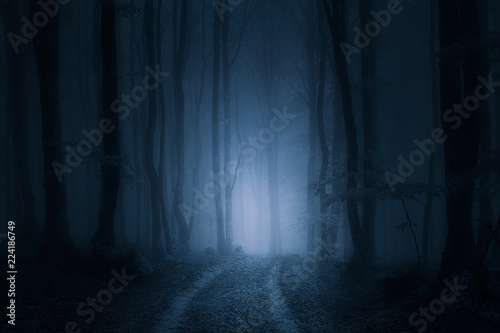 path in dark and scary forest Wallpaper Mural