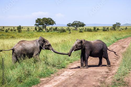 Foto op Plexiglas Olifant Elephant helps a friend over the road on the savannah in Serengeti, Tanzania.