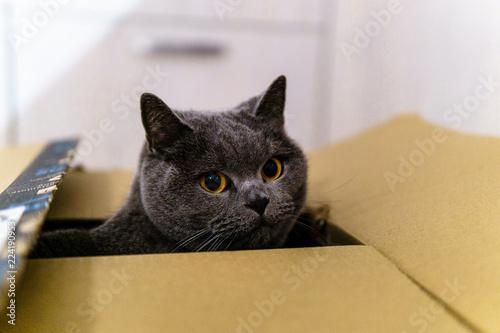 Fotografie, Obraz  Katze schaut aus Karton