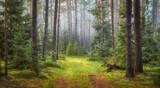Fototapeta Na ścianę - Nature green forest landscape
