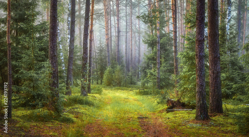 Fotobehang Bos Nature green forest landscape