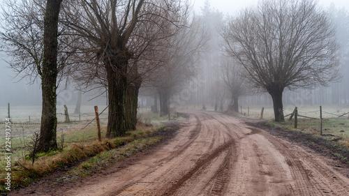 Spoed Foto op Canvas Weg in bos SONY DSC