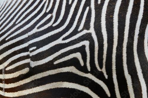 Stripes on a zebra skin
