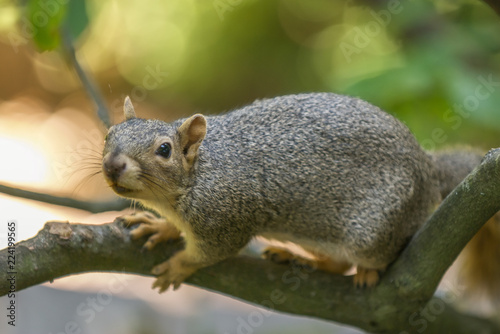 Tuinposter Eekhoorn curious squirrel