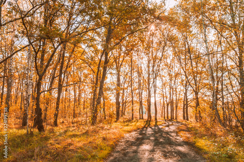 obraz PCV Path Road Way Pathway In Autumn Sunny Forest Trees