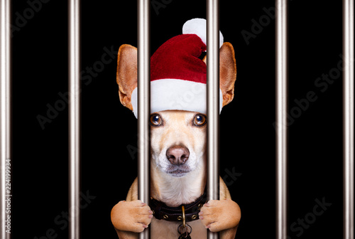 Poster Crazy dog christmas mugshot dog