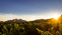 The Dentelles De Montmirail In The Distance With Grapevine In Foreground During Sunset, Vaucluse, Provence, France