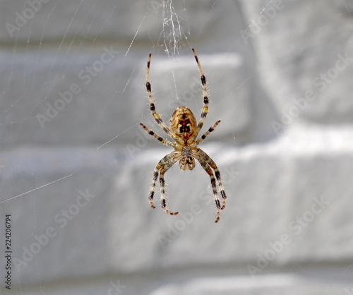 The spider sits on a cobweb