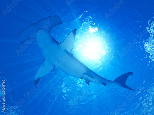 Obraz 3d rendered illustration of a hammerhead shark - fototapety do salonu