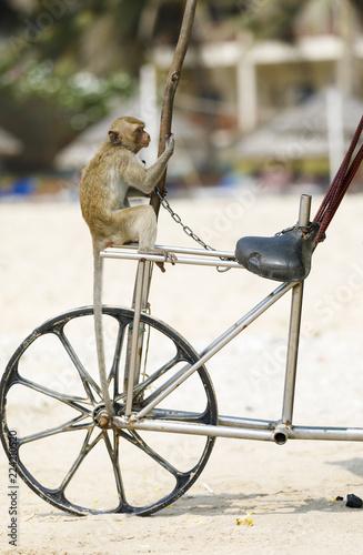 Foto op Plexiglas Aap Monkey sits on a bicycle in a beach
