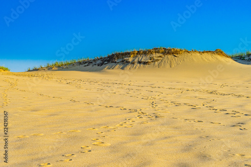 Foto  Sand Dunes and Grass of the Provincelands Cape Cod MA US.