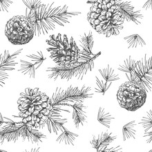 Realistic Botanical Ink Sketch Of Fir Tree Branches With Pine Cone On White Background. Vector Illustrations