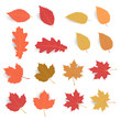 Autumn leaf pack. Leave fall in flat color with soft shadow. Maple leaf dry for decorate promotion banner and printing design. Vector illustration.