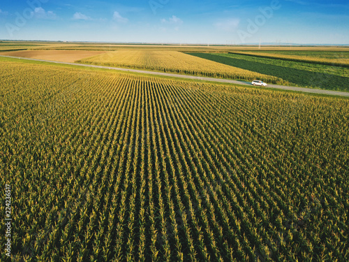 Corn field from drone perspective Fototapeta
