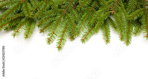 Frame of green fir tree branches on white background