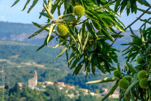 France, Ardèche : Châtaignes