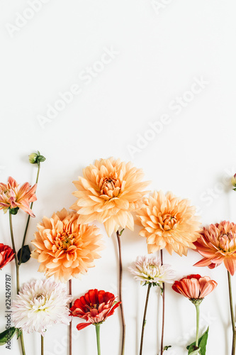 Poster de jardin Dahlia Colorful dahlia and cynicism flowers isolated on white background. Flat lay, top view.
