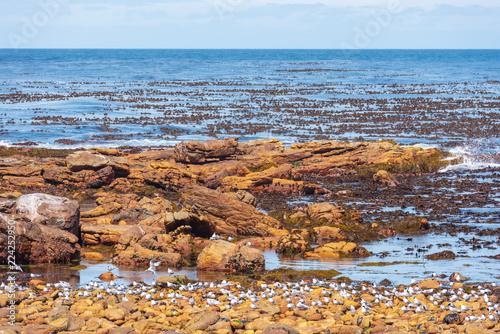 Fényképezés  The Cape of Good Hope