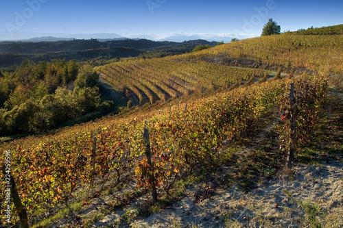 View on vineyards of Langhe Roero Monferrato, UNESCO World Heritage in Piedmont, Italy.