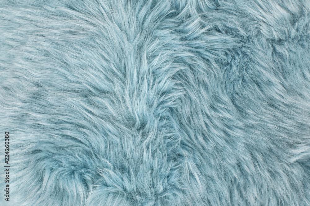 Fototapeta Natural sheepskin rug background Blue sheep fur
