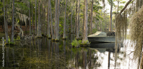 Fotografie, Obraz  A Georgia State Swamp Lake has Abundant Cypress Trees Deep South