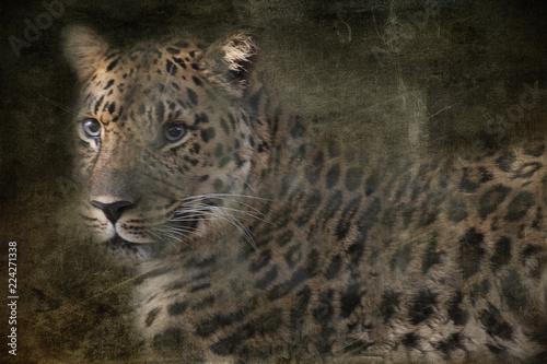 Emerging Leopard